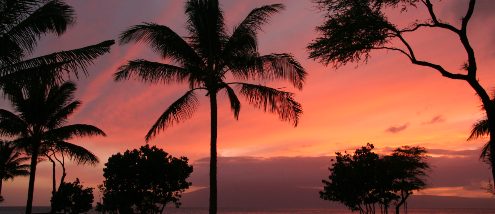 Sunset landscape with palm trees and trees