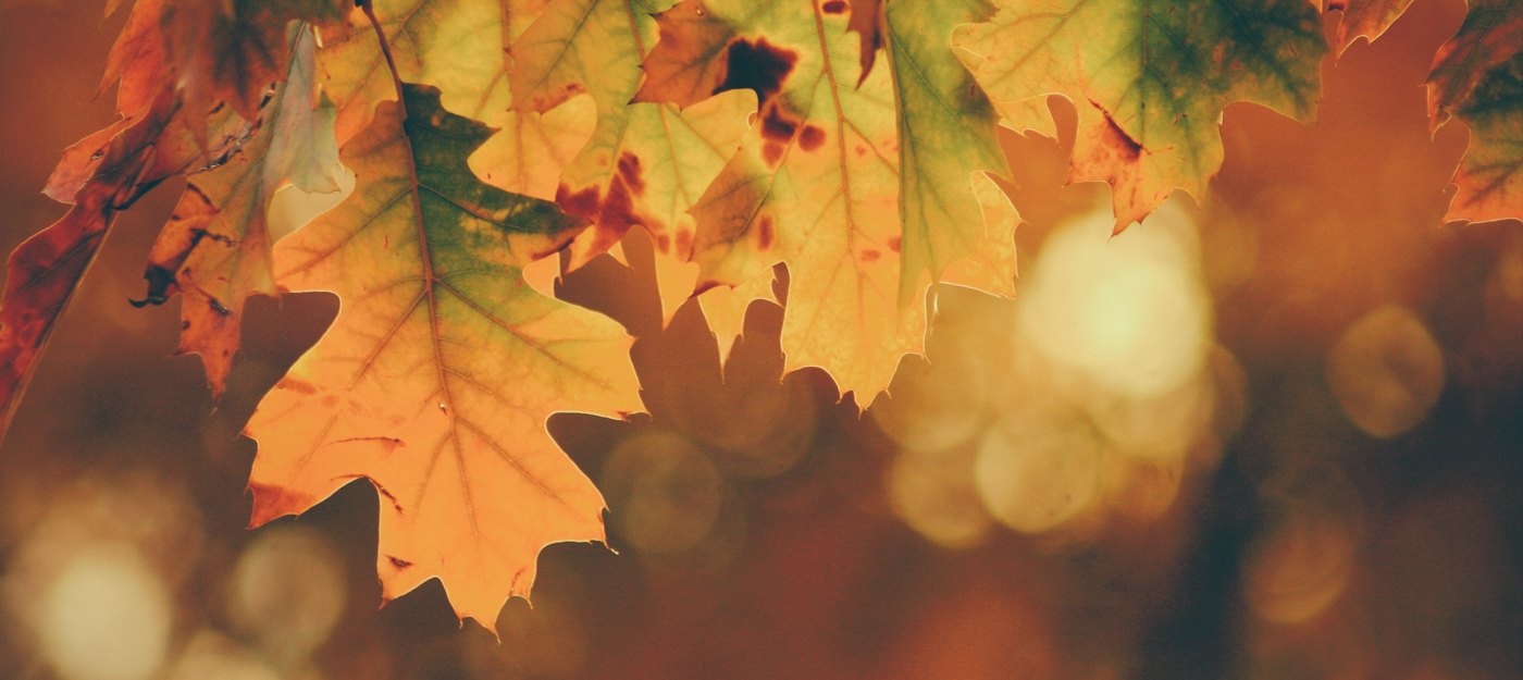 Fall theme with autumn colored leaves